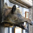 Wild boar head — Stock Photo #25073243