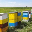 Bee hives — Stock Photo #28704687