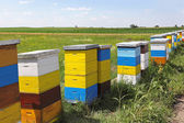 Bee hives — Stock Photo