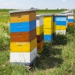 Colorful beehives — Stock Photo