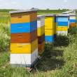 Colorful beehives — Stock Photo #30560701