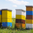 Stock Photo: Bee hives