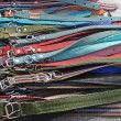 Dog collars — Stock Photo