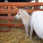 ������, ������: Pony baby