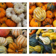 Gourds and Pumpkins — Stock Photo