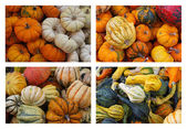 Gourds and Pumpkins — Stockfoto