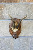 Trofee hoorns — Stockfoto