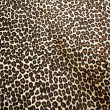 Leopard background — Stock Photo #32388107