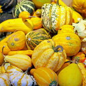 Small pumpkins — Stock Photo