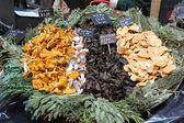 Funghi selvatici — Foto Stock