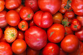 Organic tomato — Stock Photo