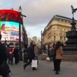 Stock Video: Piccadilly Neons
