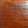 Stock Photo: Crocodile leather