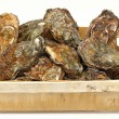 Stock Photo: Oysters crate