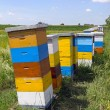 Bee hive — Stock Photo #40085227