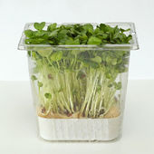 Watercress box — Stock Photo