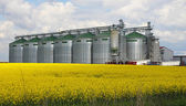 Canola oil silo — Stock Photo