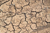 Drought — Stock Photo