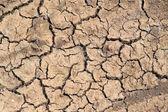 Drought — Photo
