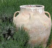 Jar in Green Grass — Stock Photo