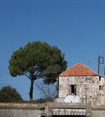 Libański drzewo dom i sosna — Zdjęcie stockowe