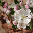Apple-tree flowers - Stock Photo