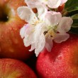 Apples and flowers — Stock Photo #13533391
