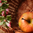 Apples and flowers — Stock Photo