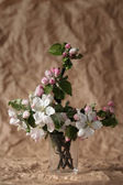 Apple-tree flowers — Stock Photo