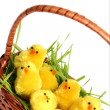 Easter chicken — Stock Photo