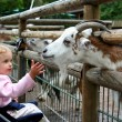 In the zoo — Stock Photo #14156081