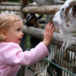 In the zoo — Stock Photo #14156352
