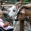 In the zoo — Stock Photo #14156360