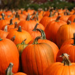 Bright pumpkins autumn outdoor still life — Stock Photo