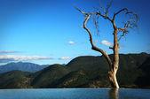 Old tree in mountain lake — Stock Photo