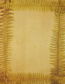 Very Old, Yellowed Image of Paper Framed With Fern Border — Stock Photo