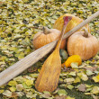Old paddles and pumpkin — Stock Photo #14050842