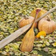 Stock Photo: Old paddles and pumpkin