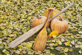 Old paddles and pumpkin — Stock Photo