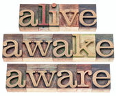 Alive, awake, aware — 图库照片