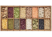 Set of 16 legume samples — 图库照片