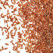 Brown rice grain — Foto Stock