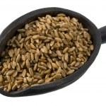 Scoop of spelt wheat berries — Stock Photo #2435168