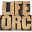 Life force in wood type — Stock Photo