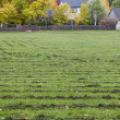 Grass field mowed — Foto Stock