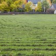 Grass field mowed — Foto de Stock