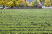 Grass field mowed — Stock Photo