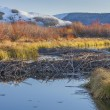 beaver dam on north platte river — Stock Photo