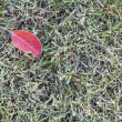 Lawn grass covered with frost — Stock Photo
