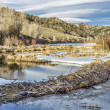 Winter on beaver swamp — Stock Photo